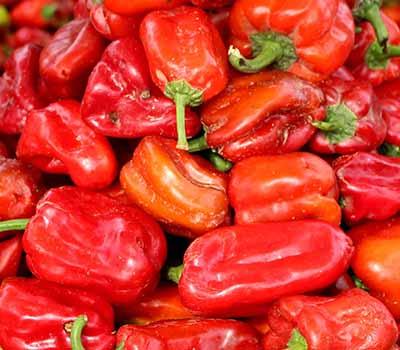 Tatashe (red bell pepper)