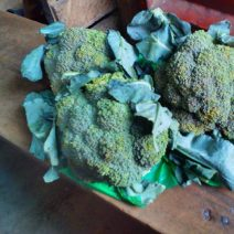 Buy broccoli in Nigeria