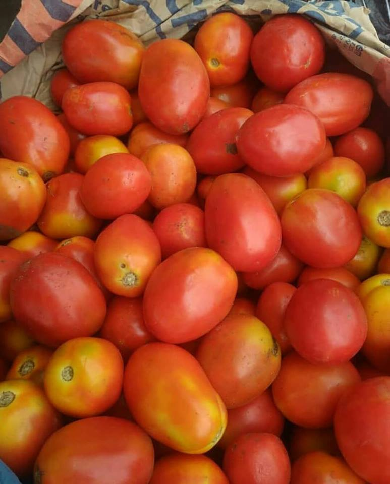 fresh tomato fruit